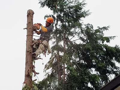 伐採の作業写真